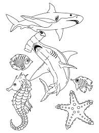 sea life coloring pages virtren com