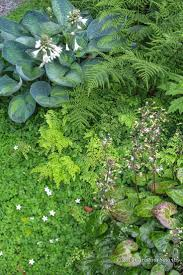 207 best shade gardens images on pinterest landscaping garden