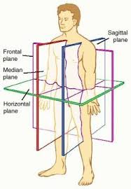 Essentials Of Human Anatomy And Physiology Notes 59 Best Anatomy And Physiology Images On Pinterest Medicine Med