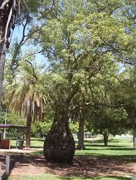 australian native edible plants plants with edible seeds archives mallee native plants mallee