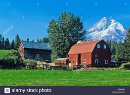 red barn in the hood valley with mt hood in oregon stock photo