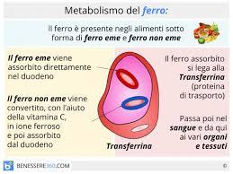 alimentazione ferro basso effetti alimenti dieta e sintomi da carenza