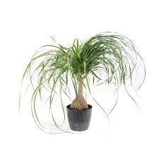 shop house plants at lowes com