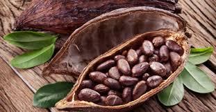 livre la cuisine pour les nuls charmant livre de cuisine pour les nuls 6 graines de cacao