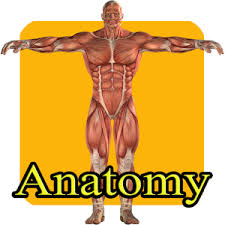 Google Body Anatomy Learn Human Anatomy For Kids Android Apps On Google Play