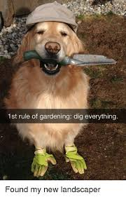 Landscaping Memes - 25 best memes about landscaping landscaping memes