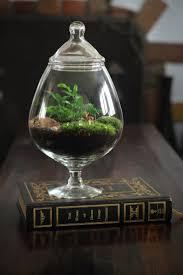 866 best under glass images on pinterest plants mini gardens