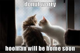 Soon Cat Meme - donut worry hooman will be home soon lolcats lol cat memes