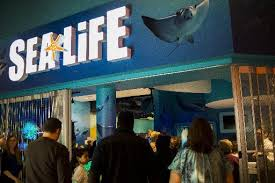 sea michigan aquarium is officially open at great lakes
