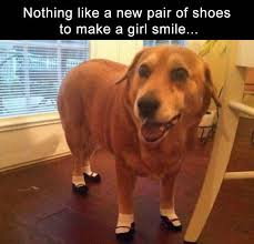 resume templates janitorial supervisor meme doge wallpaper meme 409 best funny dogs images on pinterest animal funnies animal