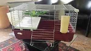 gabbie per conigli nani usate gabbia conigli nano usato vedi tutte i 107 prezzi