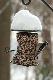 feed the birds at mid winter food sources run low so stocking