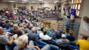 County Line Sale Barn Livestock Auction Facility Cattle Shelby