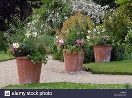 large terracotta pots with lilium regale pelargoniums at hanham