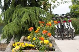 camping belvedere lazise lake garda italy book your camping