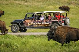 Minnesota wildlife tours images Buffalo safari jeep tour activities in the park activities jpg