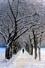 in black jacket walking on snowy tree during daytime free