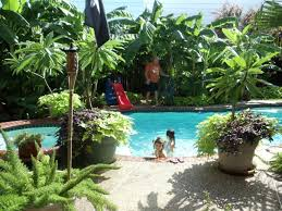 tropical landscape ideas with stylish swimming pool design and