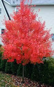689 best landscape shrubs trees images on plants