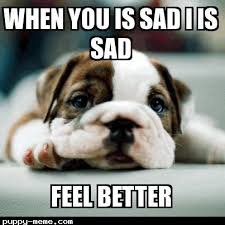 get well dog meme well best of the funny meme