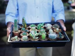Succulents That Don T Need Light Growing Succulents Outdoors Diy