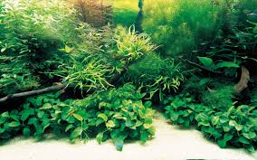 Aquascaping Plants Home Accessories Simple And Effective Guide On Reef Aquascape