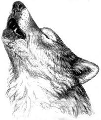 best 25 wolf howling drawing ideas on pinterest howling wolf