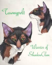 tawnypelt fierce warrior of shadowclan sister to brambleclaw