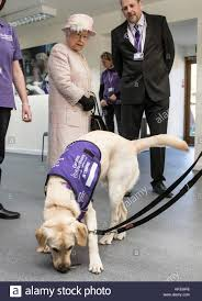 queen elizabeth dog queen elizabeth ii watches a demonstration by labradors of the