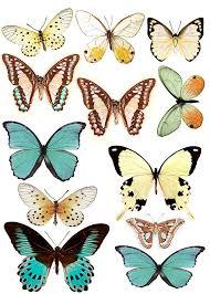 22 best butterflies images on pinterest butterflies butterfly