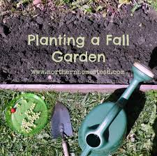 planting a fall garden in a northern climate northern homestead