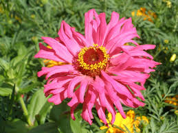 Summer Gardening - easy annual flowers bloom all summer garden org