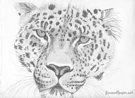 tiger pictures of pencil sketch by flairshadow on deviantart