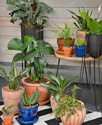 home plants discover your wild with indoor plants and lifestyle home garden