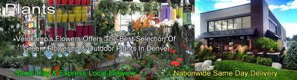 Best Plants For Hanging Baskets by Plants Denver Colorado Green U0026 Flowering Plants Hanging Baskets
