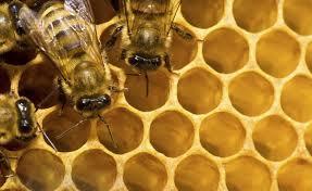 Seeking Honey Honey Farm Sues Bad Pollen The West Australian
