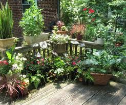 pflanzen fã r den balkon kräuter pflanzen balkon topf 23 16 22 egenis inspirierend