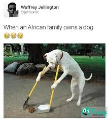 African Parents Meme - funny meme when an african family owns a dog funnyppl com