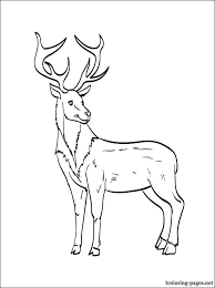 reindeer coloring coloring pages