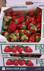 box of strawberries on sale at a farmers market in winter garden