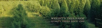 wright u0027s christmas tree farm
