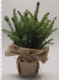 Pics Of Centerpieces by Tree Seedling Centerpiece