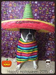boxer dog 2015 diary 258 best boxer dogs images on pinterest boxer dogs boxers and