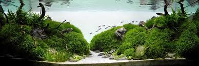 Aquascape Aquarium Designs Home Design Aquascape Aquarium Design Ideas Aquascape Aquarium