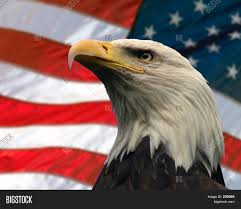 Bald Eagle And American Flag American Flag Images Illustrations Vectors American Flag Stock