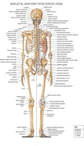 Anatomy Directional Terms Worksheet Best 20 Anatomy Of The Body Ideas On Pinterest Body Bones