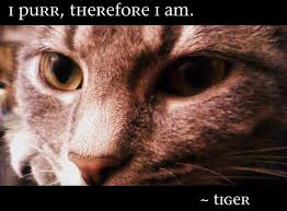 Awesome Quotes About Cats Being - 100 best cat quotes images on pinterest cat quotes quotes about