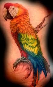 158 best birds images on pinterest bird tattoos tatoo and