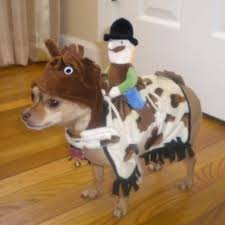 Chihuahua Halloween Costume 72 Disfraces Mascotas Pet Images