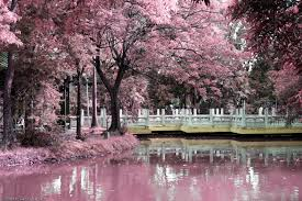 chinese gardens google search asian gardens landcapes of